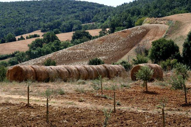 Toscana-2009-84